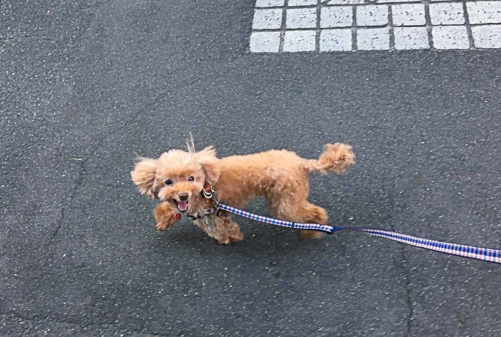 犬の散歩をより良くする3つのポイント
