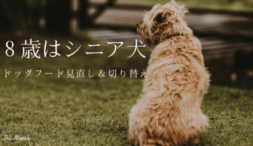 愛犬のシニアフードへの切り替え時期|良いドッグフードの見分け方