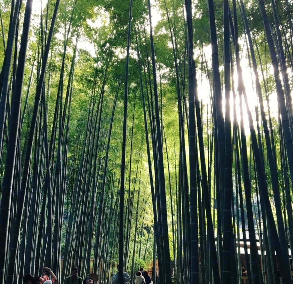 報国寺の竹庭